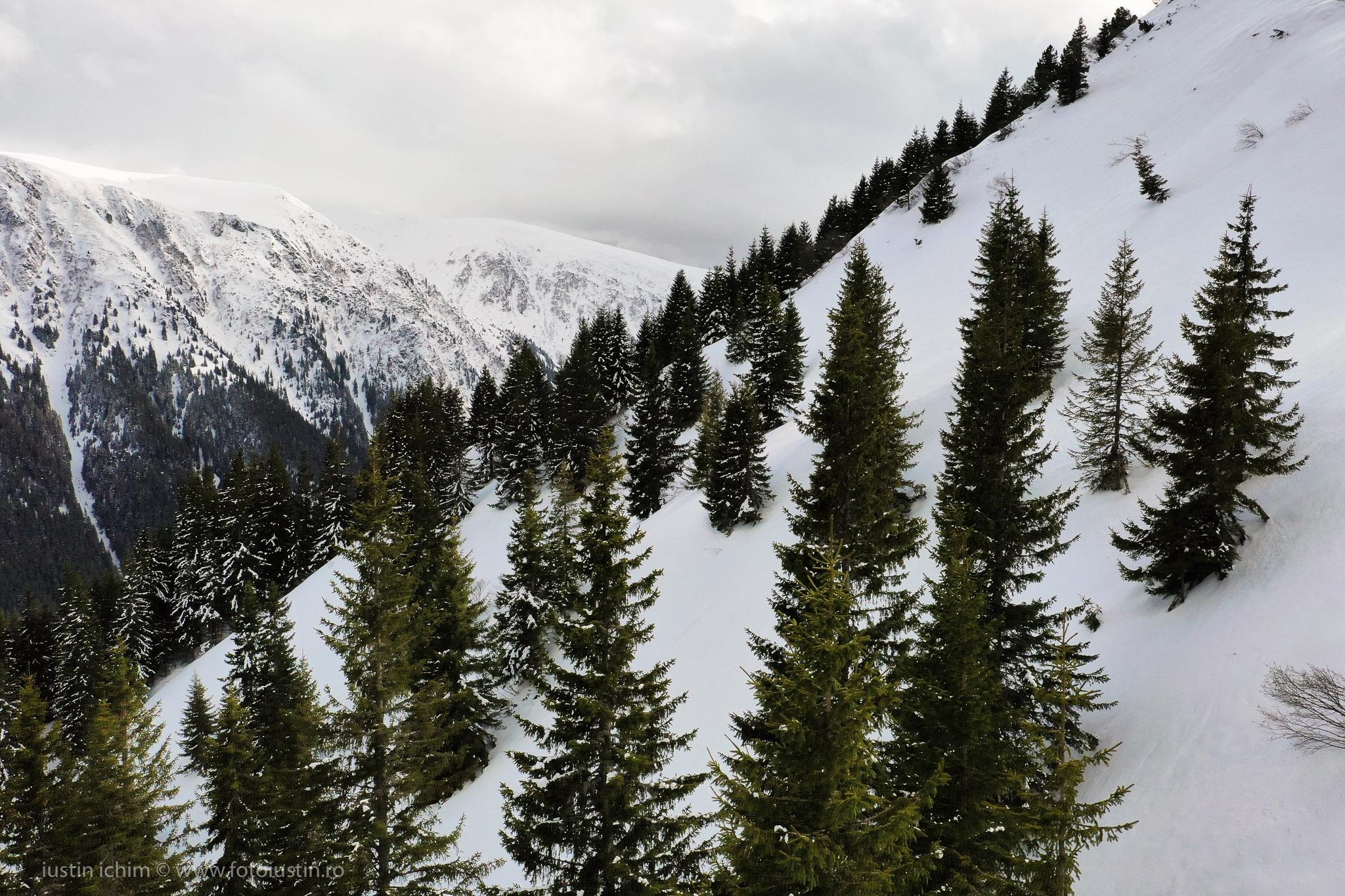 Peisaj de iarna, Fagaras