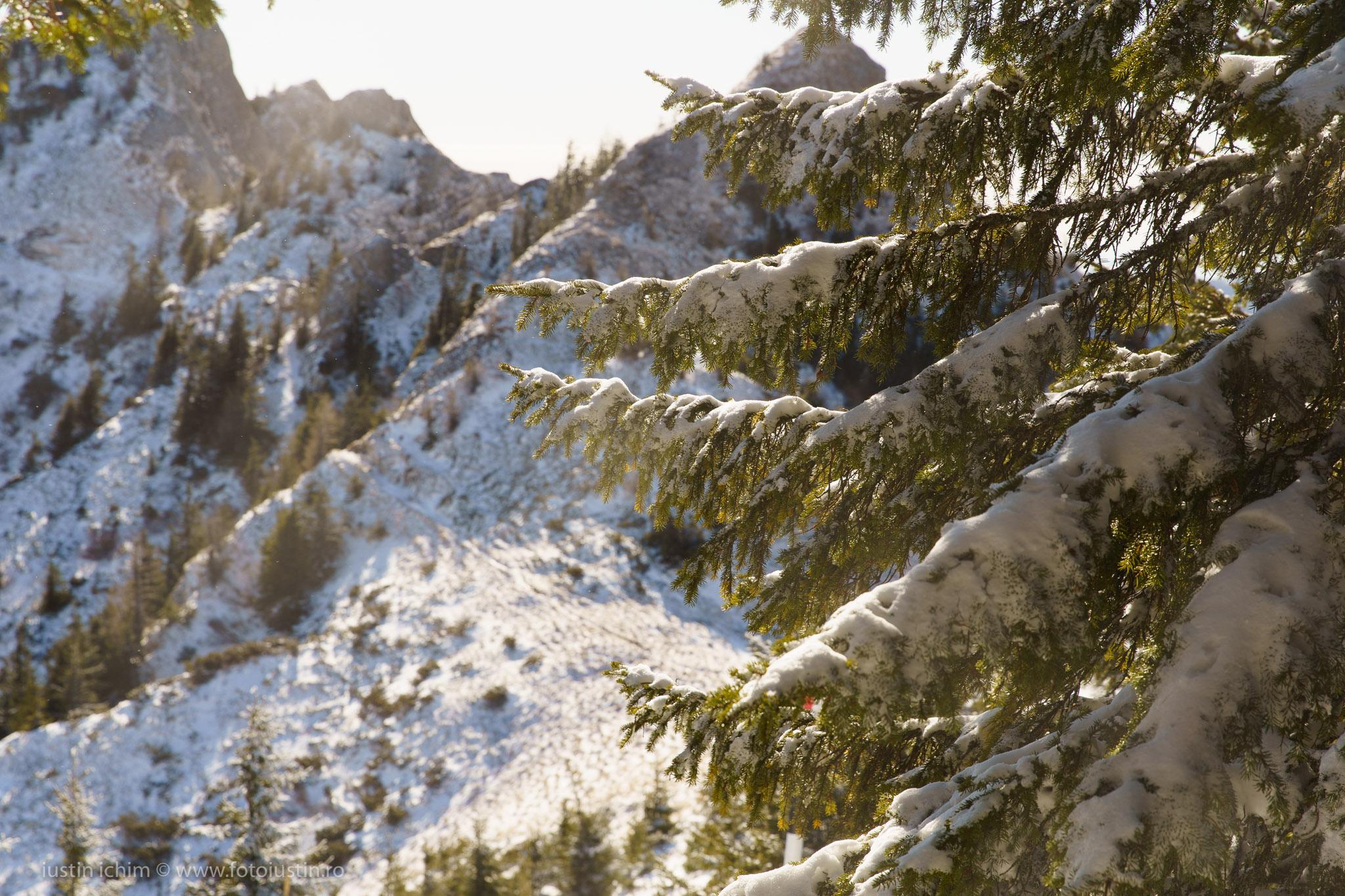 Fundal de iarnă