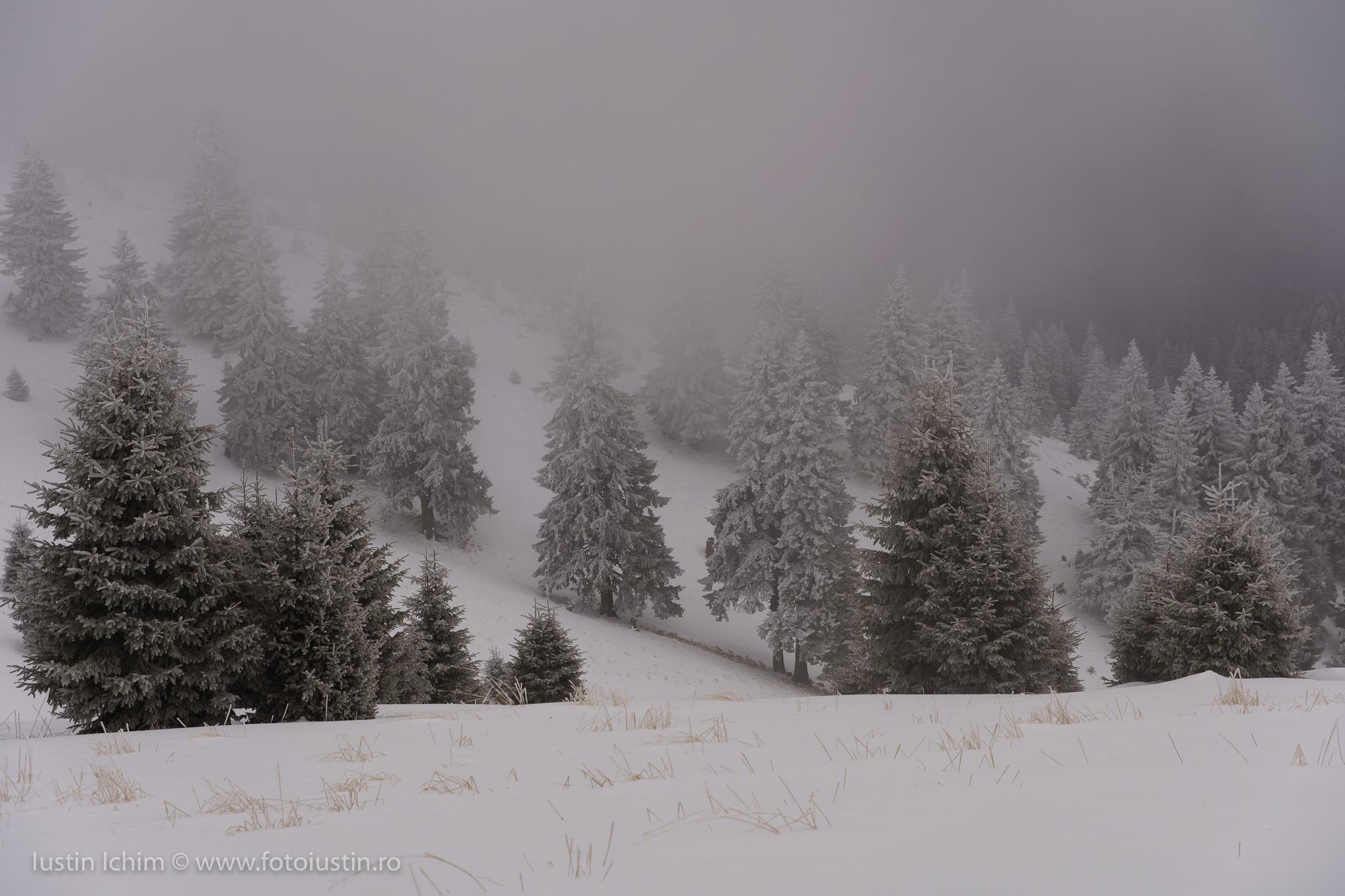 Peisaj mistic de iarnă