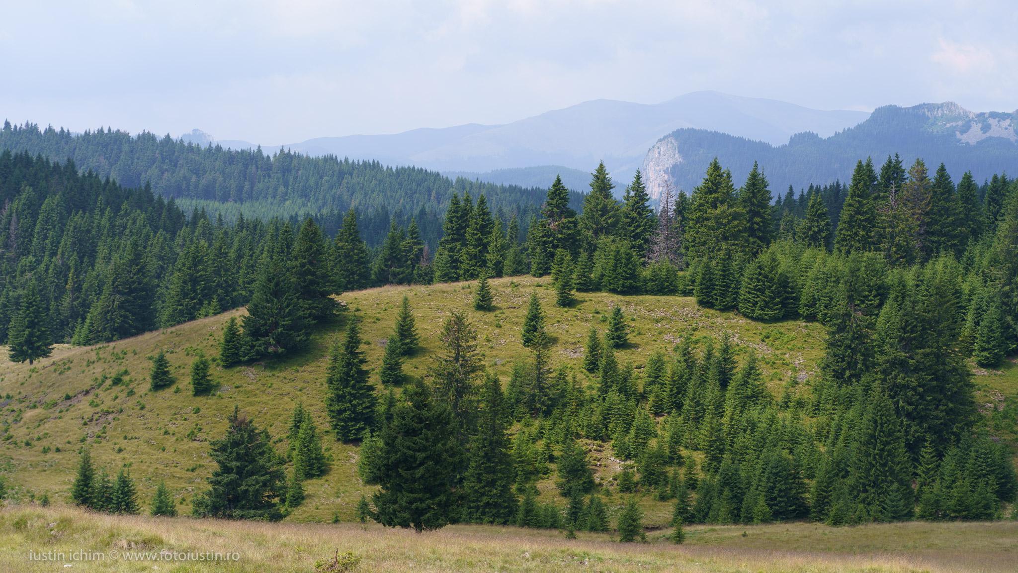 Peisaj Munții Bucegi
