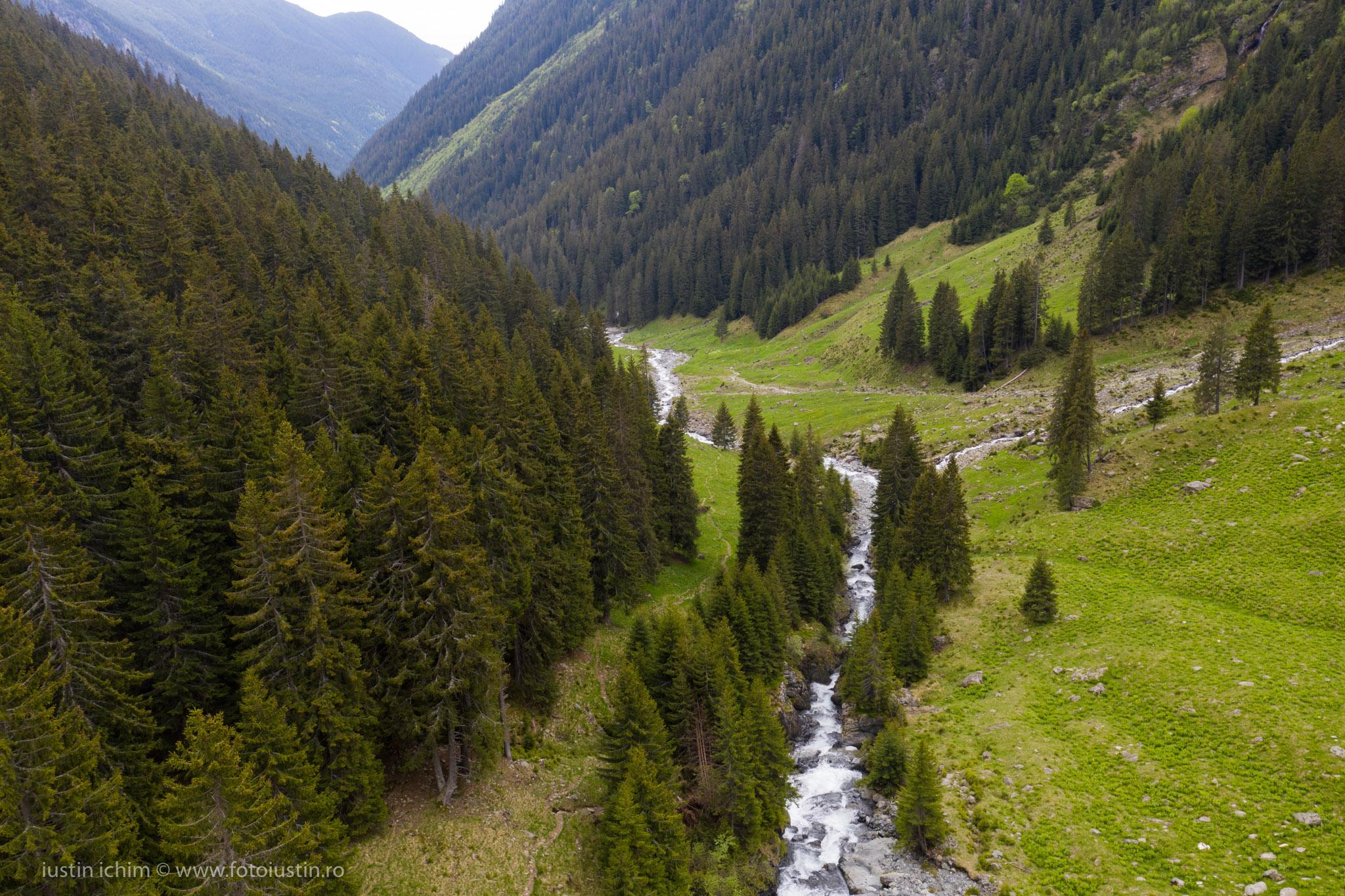 Valea Rea, Făgăraș