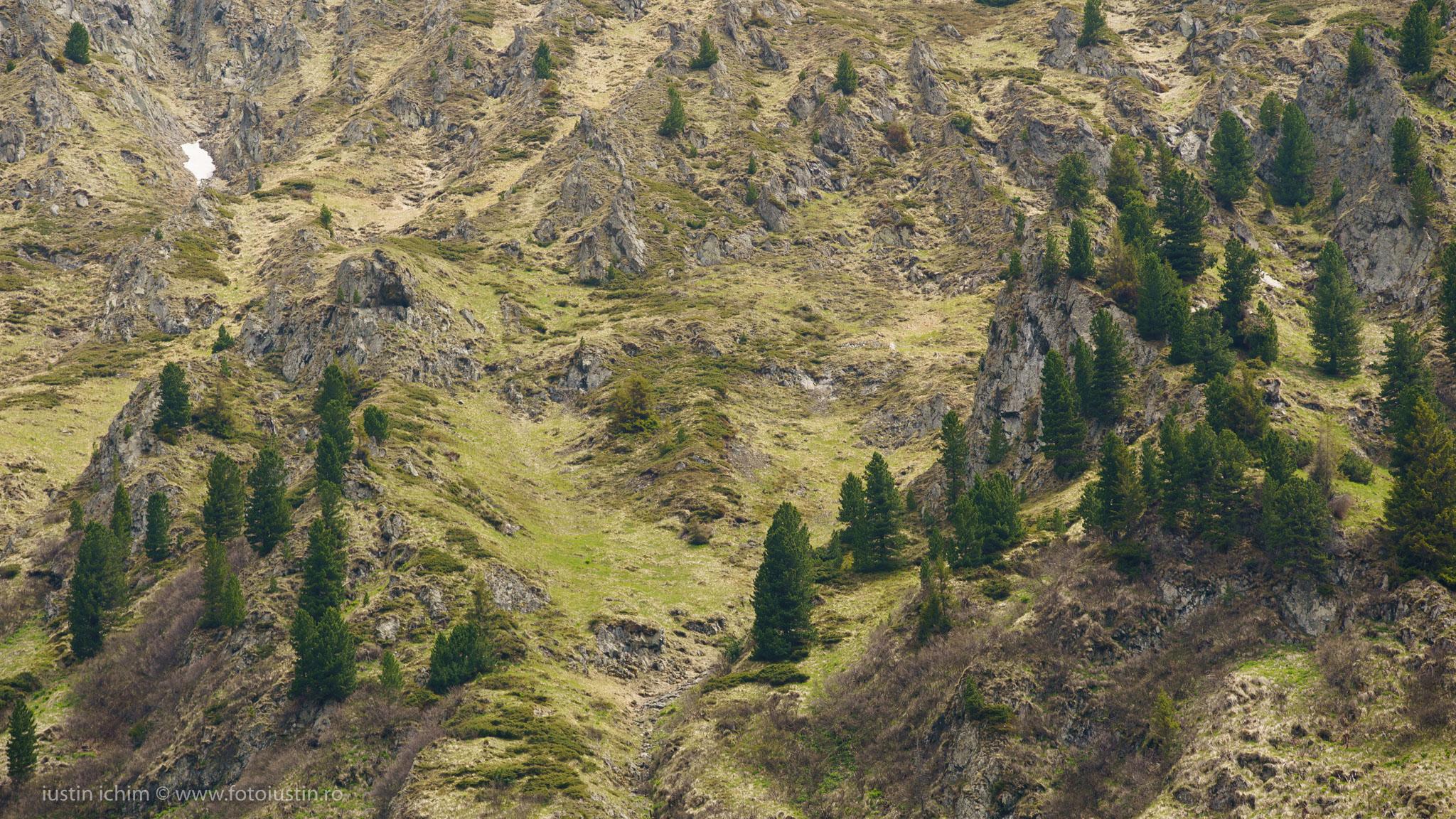 Peisaj alpin