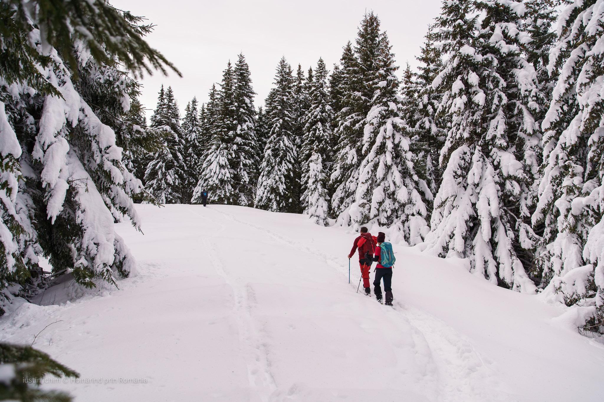 Traseu de iarna in Moieciu de Sus