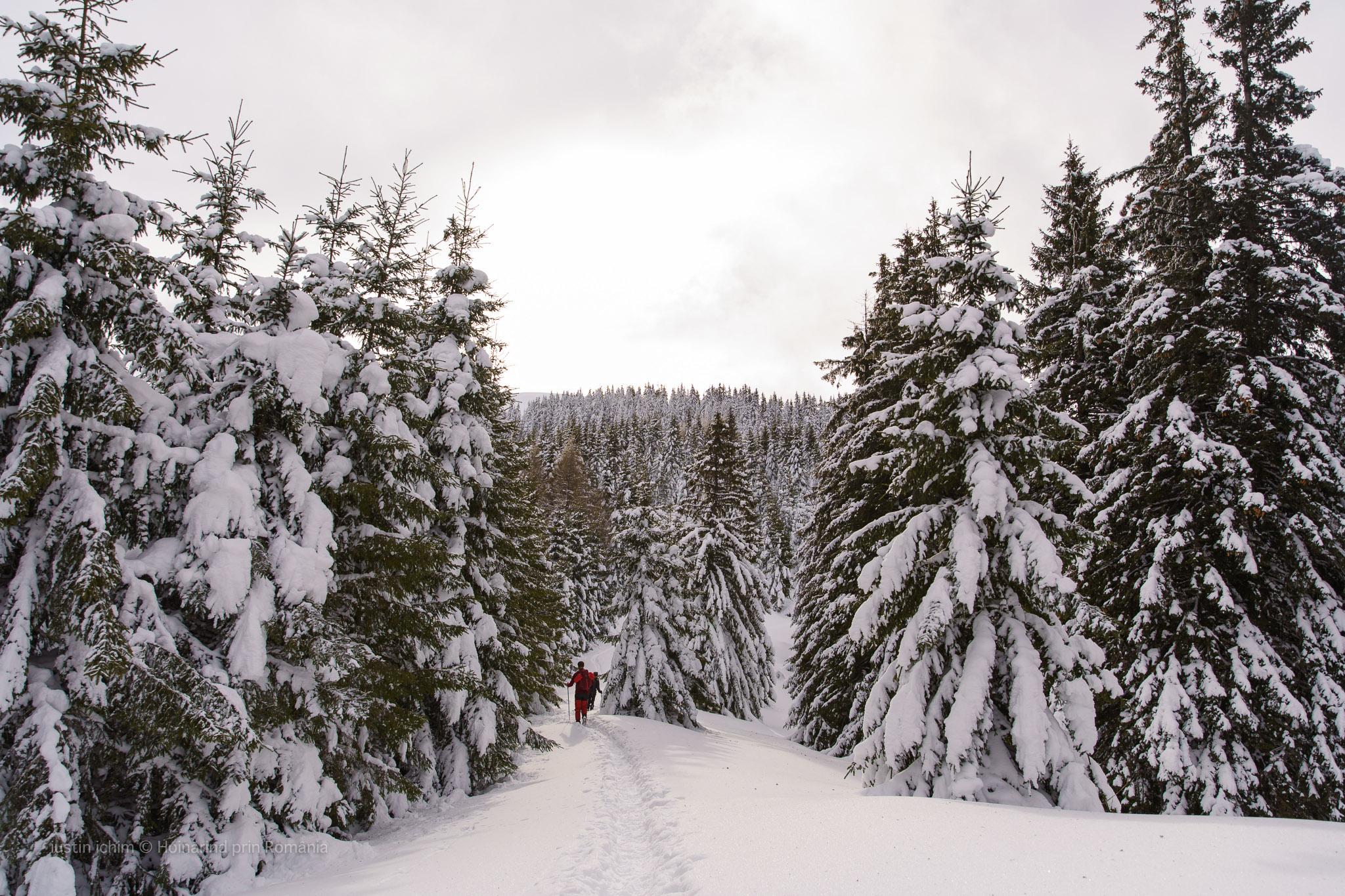 Traseu de iarnă prin nămeți