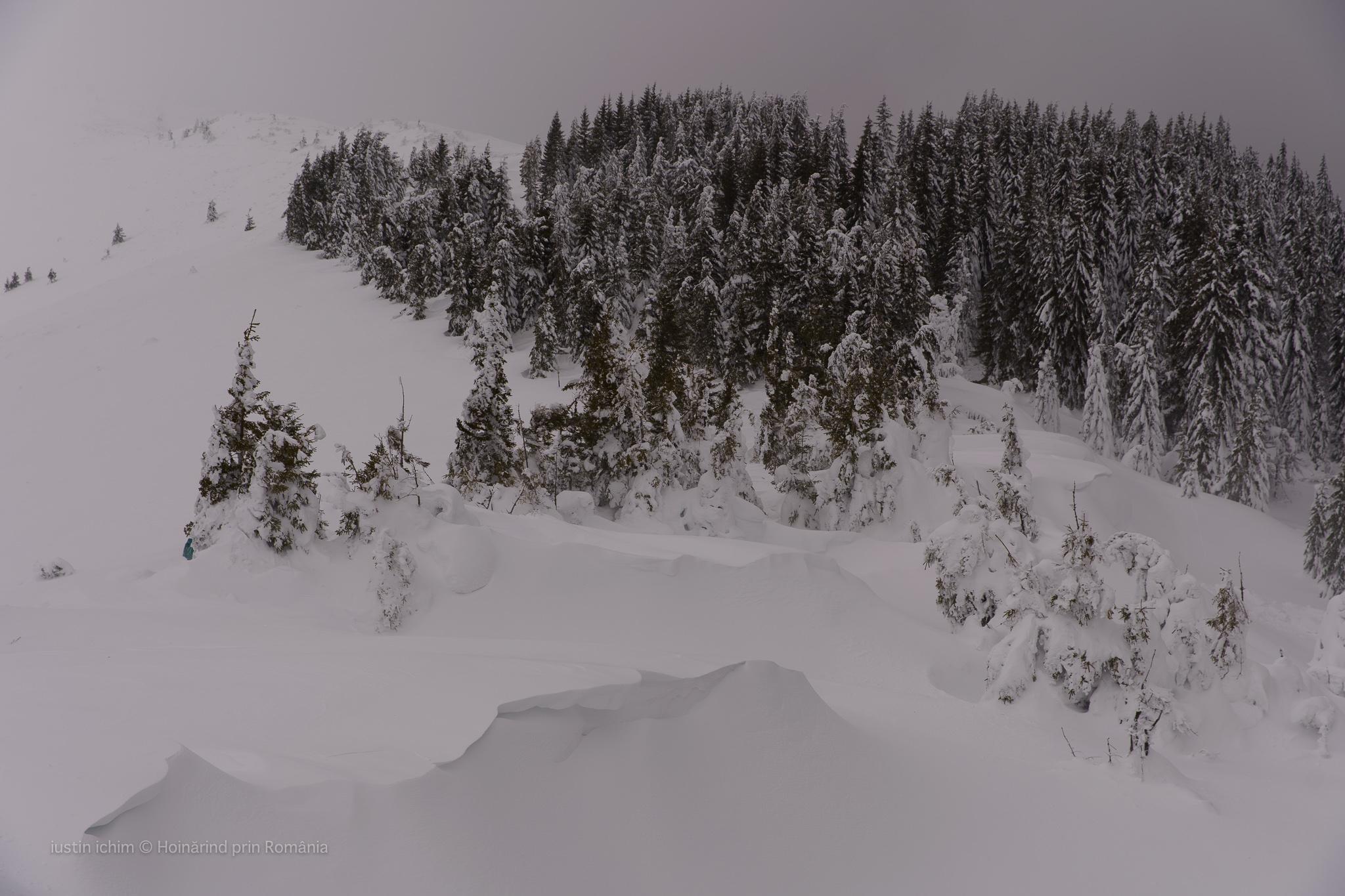 Troiene de zăpadă, vedere aeriană