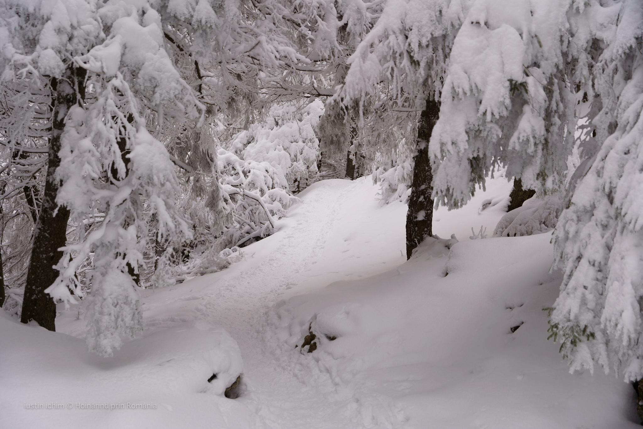 Traseu de iarnă in Hășmaș