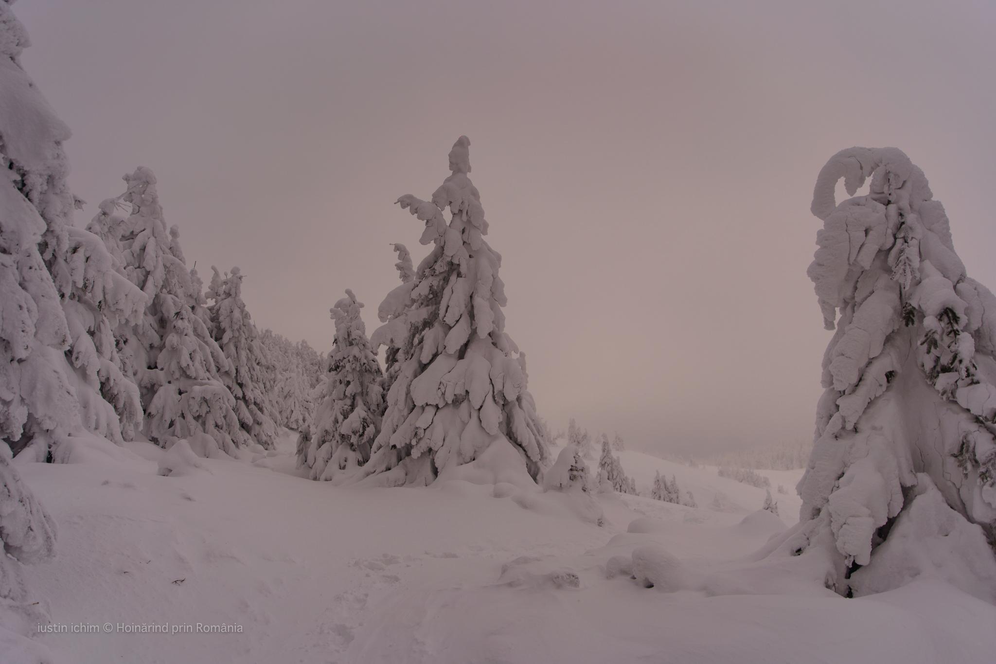 Peisaj de iarna in Muntii Hășmaș