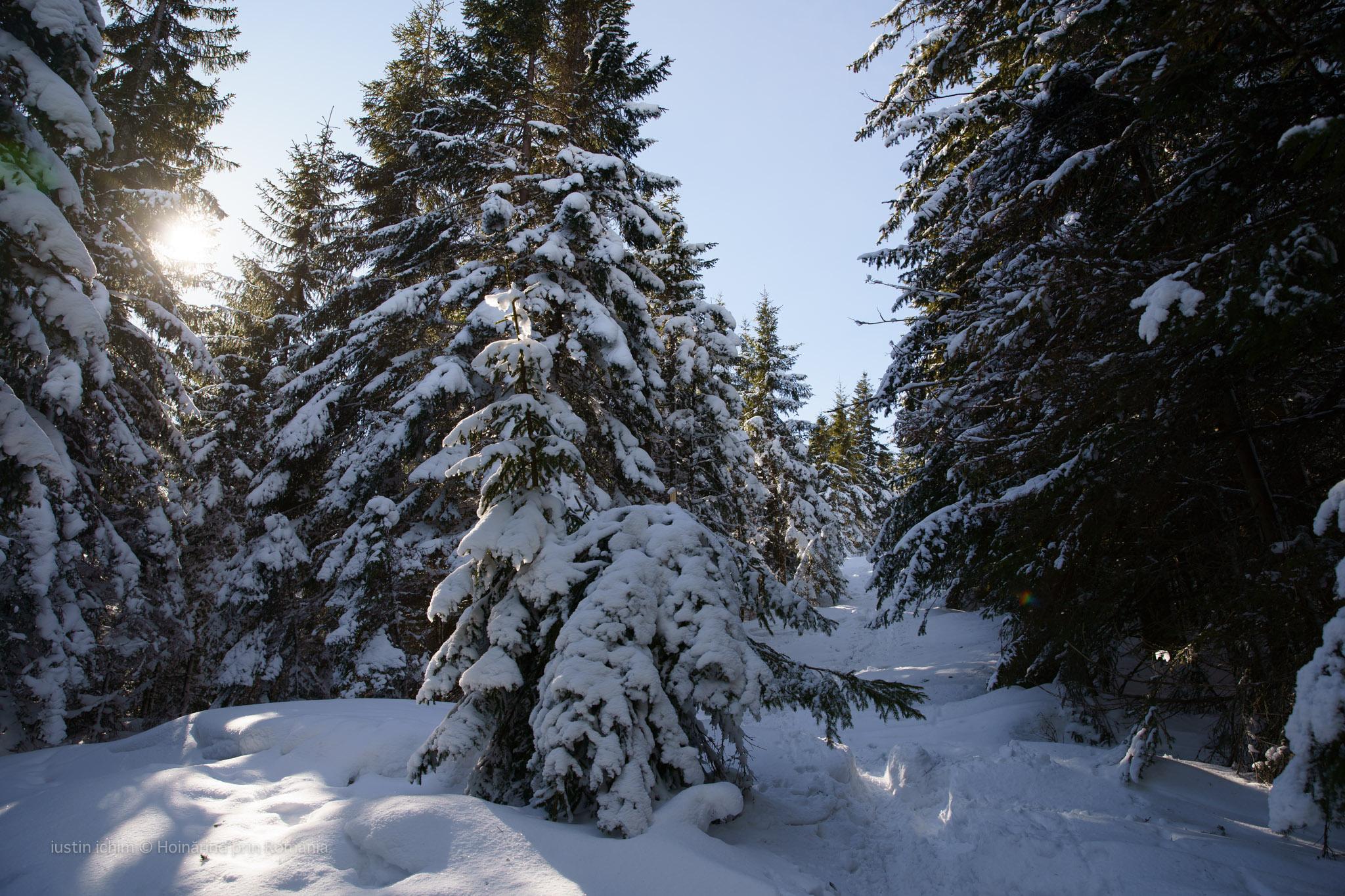 Imagine din traseu prin pădure
