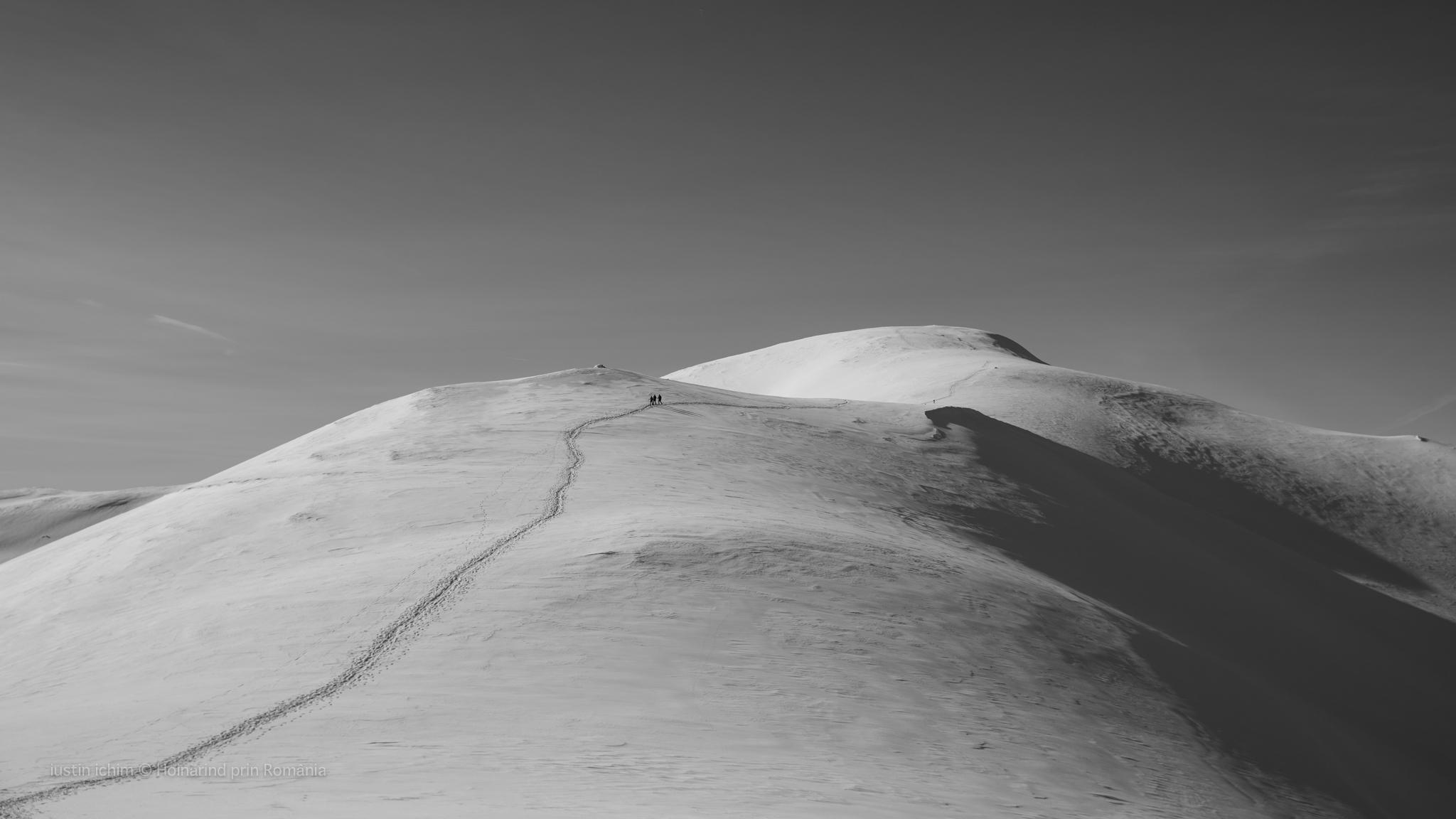 Peisaj alb negru in Leaota