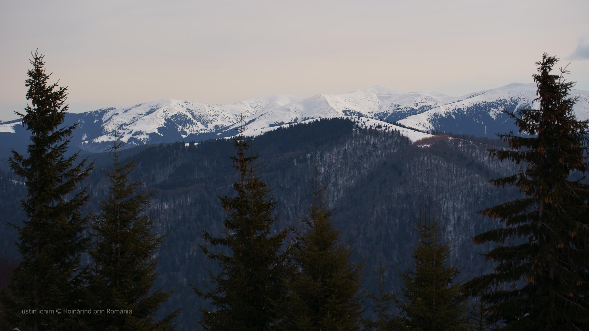Munții Neamțului