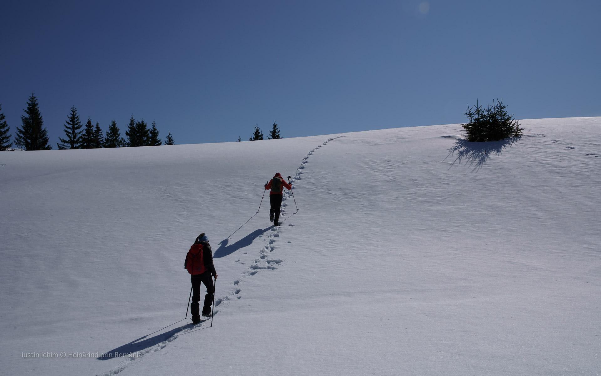 Peisaj de iarnă pe urmele ursului