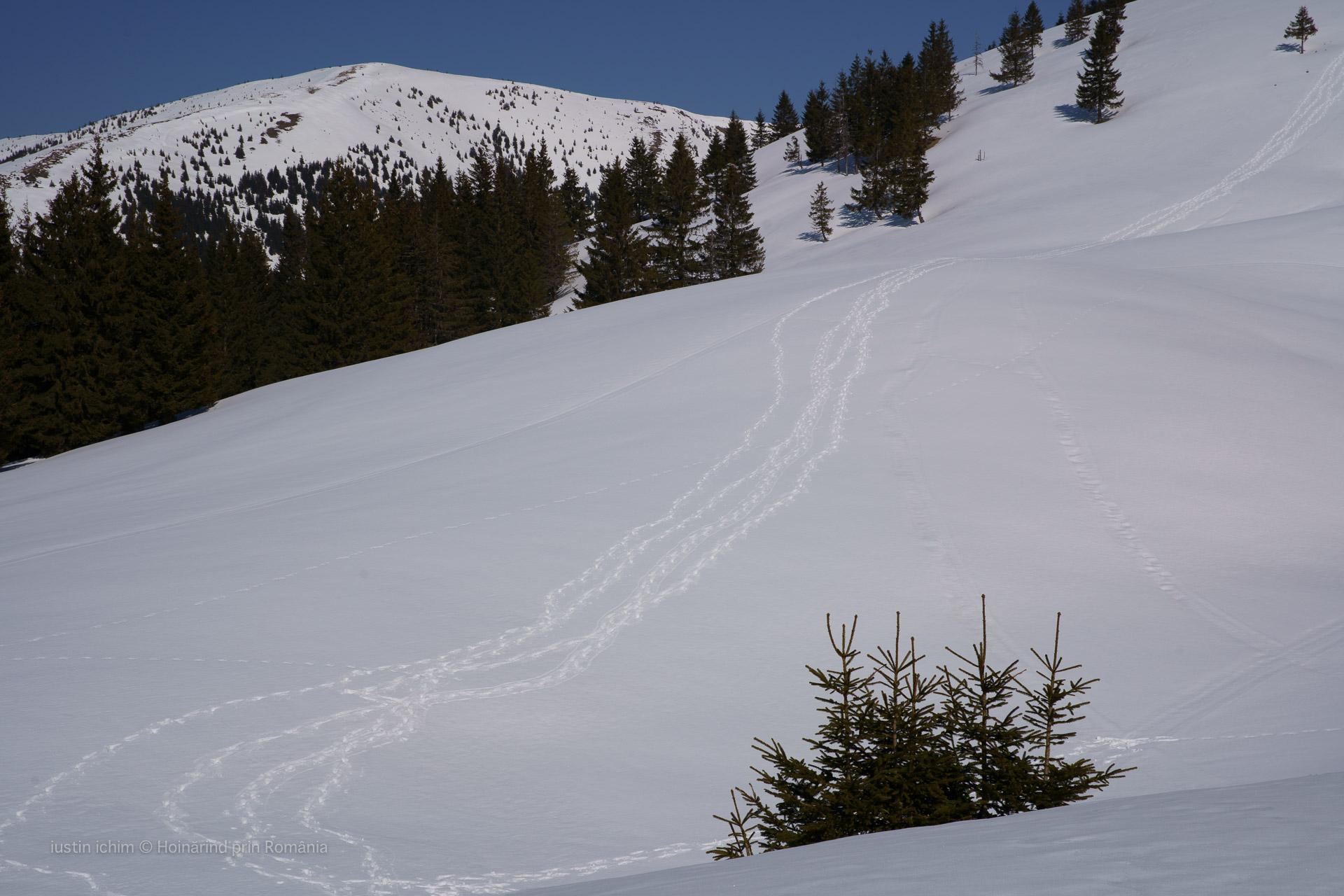 Urmele noastre pe zăpadă