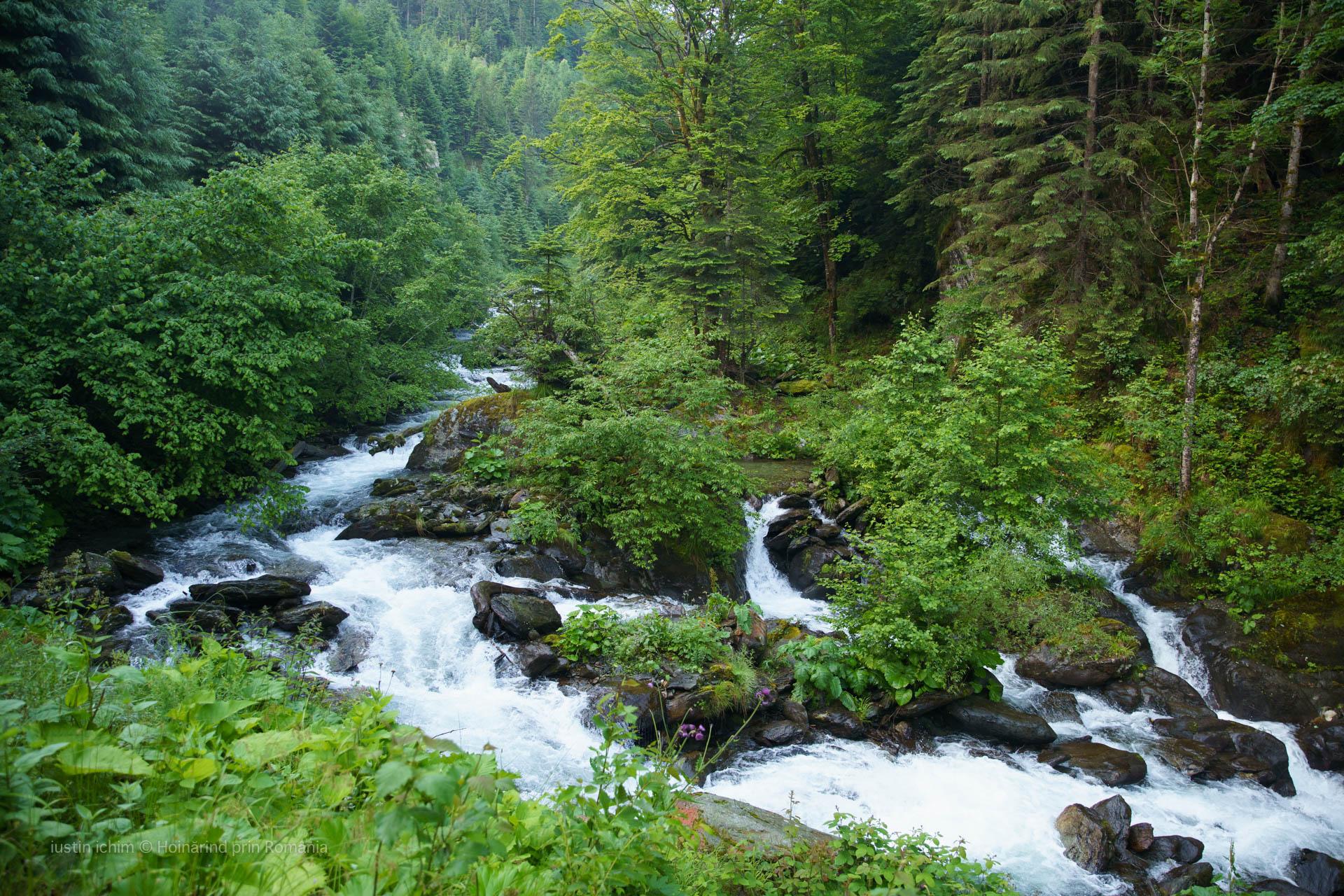 Râul Arpașul Mare