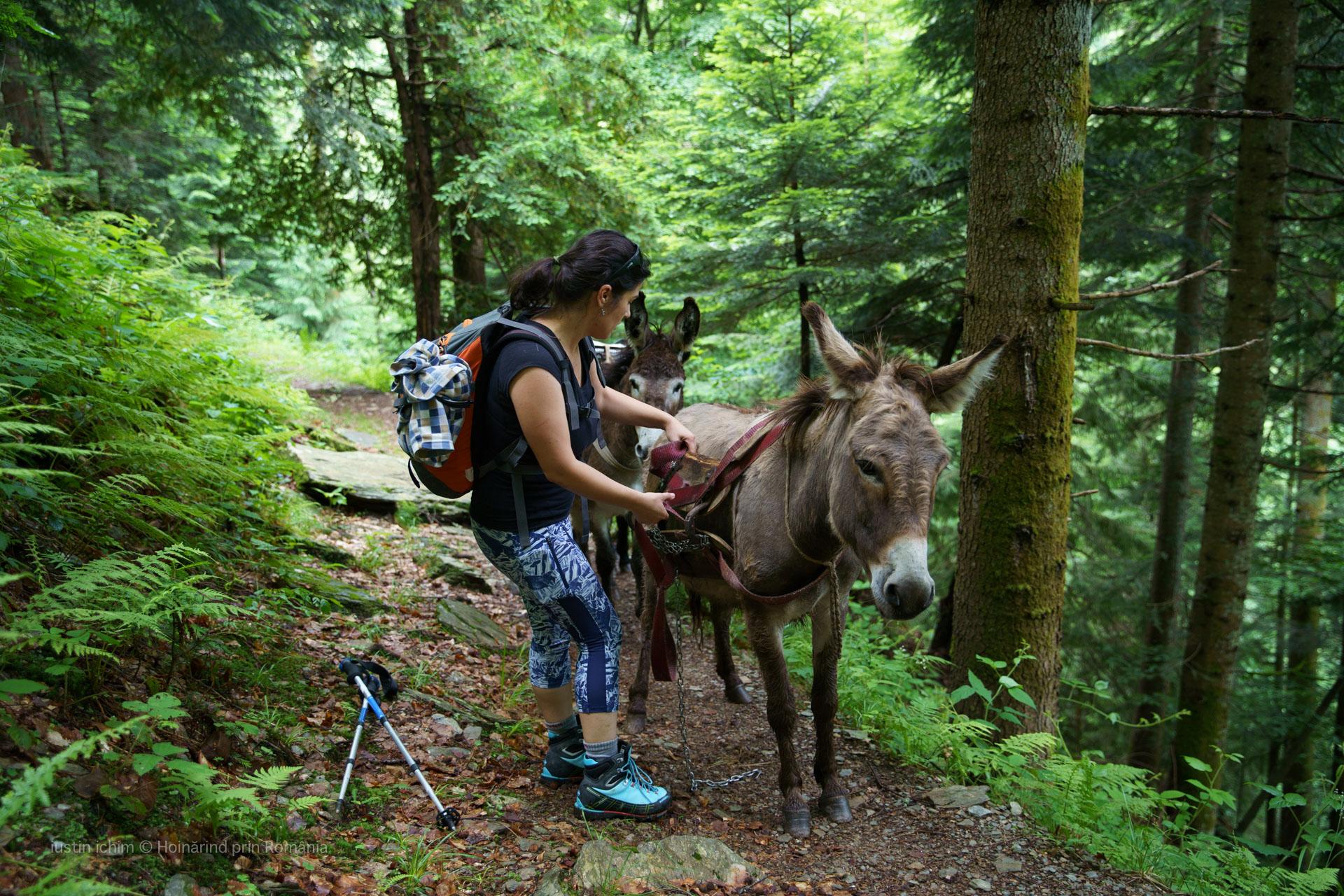 In ajutorul măgărușilor cărăuși de la Podragu